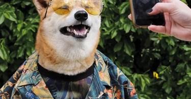 cao famoso - Blogueirinhos pets do Instagram: Eles são mais famosos que você!
