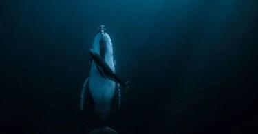 Categoria Água Grande Prêmio Jasmine Carey - Foto Impressionante - Você não vai acreditar como ele fez esta foto!
