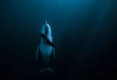 Categoria Água Grande Prêmio Jasmine Carey - Fotógrafa Oceanógrafa de Baleias ganha prêmio principal de 120 mil dólares