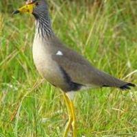 Karkloof Wildlife Sightings - April