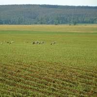 The Three Cranes and their Landowner Custodians