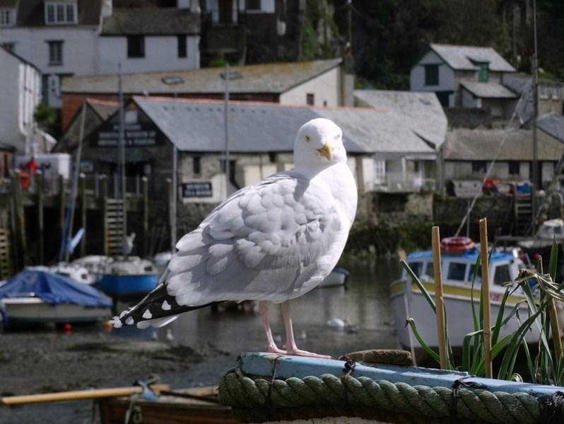 Cornwall April 2016 (62)