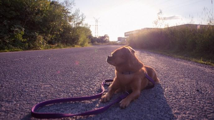 Photo by janwh on Foter.com CC BY-SA .jpg