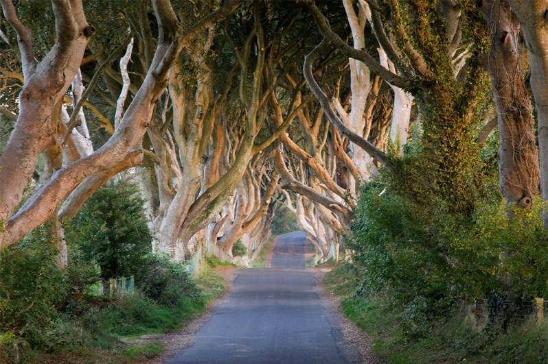 Game of Thrones - 'King's Road' (The Dark Hedges).jpg