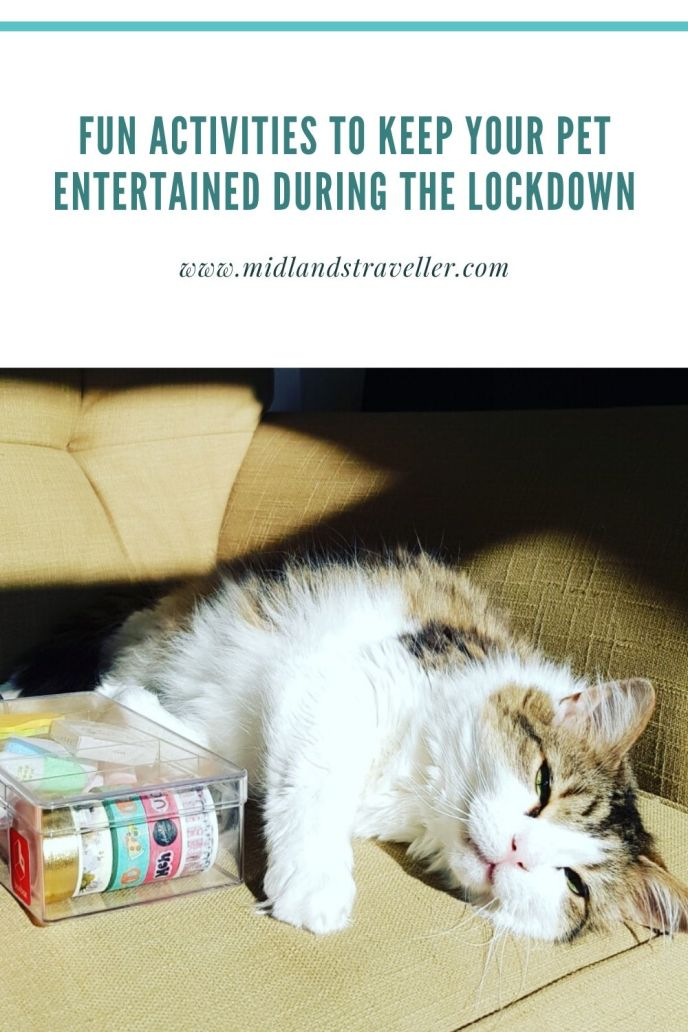 Fun Activities to Keep Your Pet Entertained During the Lockdown