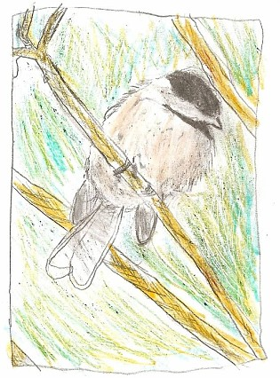 Bird Drawing by Margaret Curren on Mid-Life Blogger