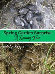 Spring Garden Surprise