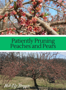 Patiently Pruning Peaches and Pears