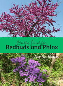 On the Hunt for Redbuds and Phlox