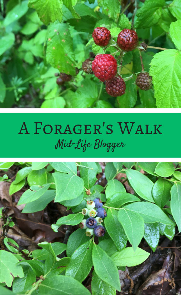 A Forager's Walk