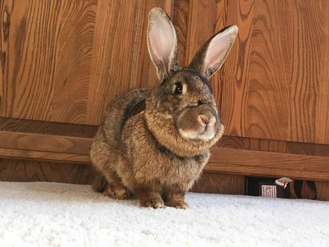 The Rabbit Mystery