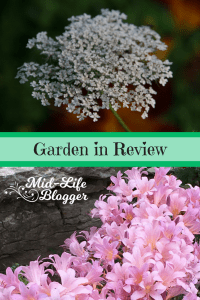 Garden in Review