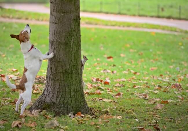 perisistence, motivation, commitment, dogs, squirrel, oak tree
