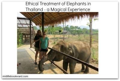 ethical-treatment-asian-elephants-thailand
