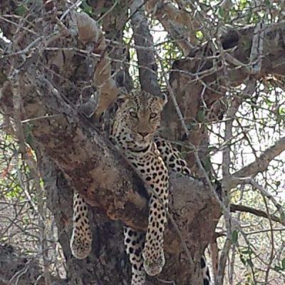 South Africa Wildlife Safari: Thornybush Game Reserve & Monwana Game Lodge
