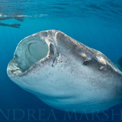 Meet Travel Blogger and Underwater Photographer, Tam Warner Minton