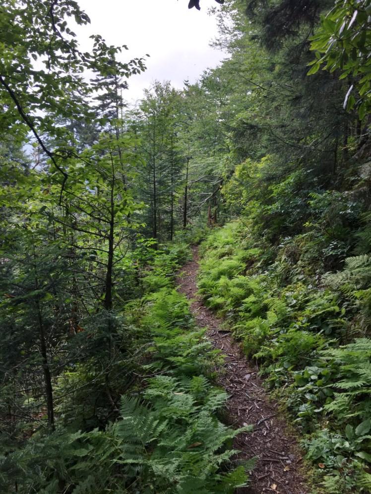 The Beauty of Fork Ridge