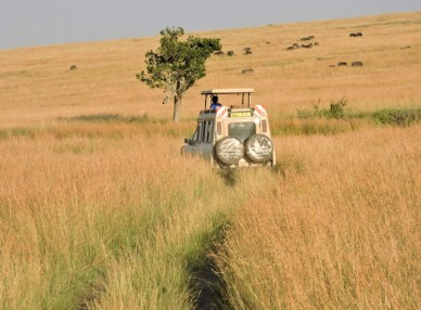 Our lead Toyota Safari 4WD off on another game-drive.