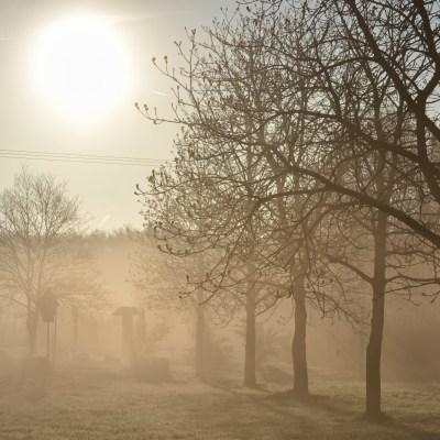 Walking in the Mist: A Back to School Memory