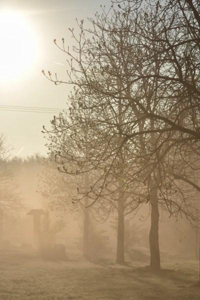 Walking in the Mist: A Back-to-School Memory