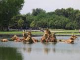 Apollo fountain, Palace of Versailles