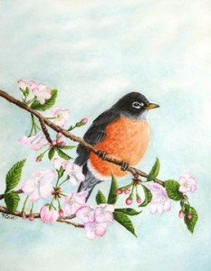 Robin sitting on a branch of cherry blossoms.