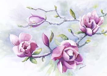 Purple magnolia blossoms in springtime.