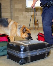 Explosive Detection Luggage Training