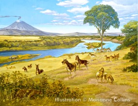 Miocene Horses, courtesy of Marianne Collins