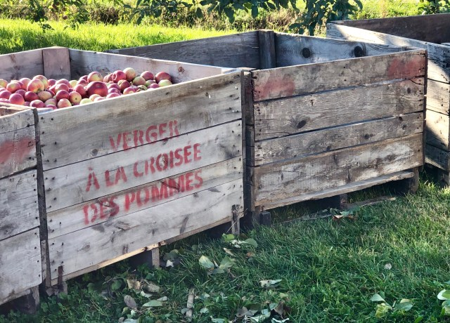 organic apple picking in Oka