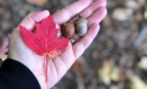 Montreal Botanical Gardens – Fall Festivities