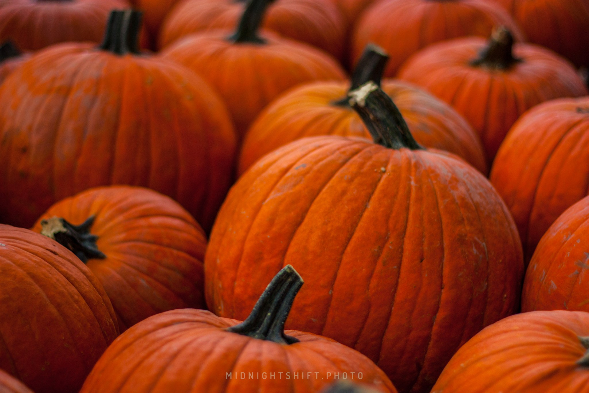 Pumpkin Patch in Acushnet Massachusetts