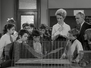 the-munsters-bats-of-a-feather