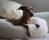 Hundebett JULINKA CLOUD 9 Test  Hundeblog miDoggy