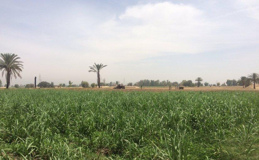 النظرة القاصرة والمزرعة
