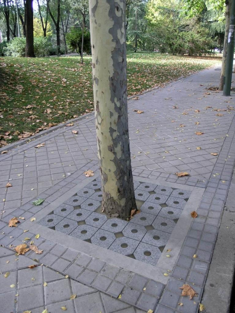 Raeiros Entourage arbre_GR02