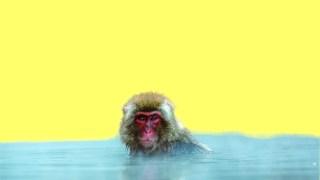 黄色背景に猿が水に遣っている