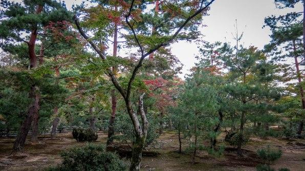a snapshot of the zen garden