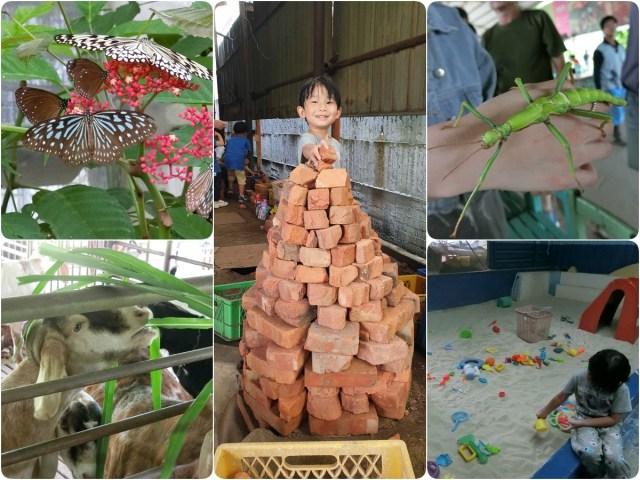 亞力山大蝴蝶生態教育農場