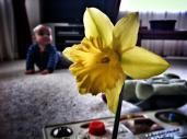We found a daffodil at Grandma's house in the garden.