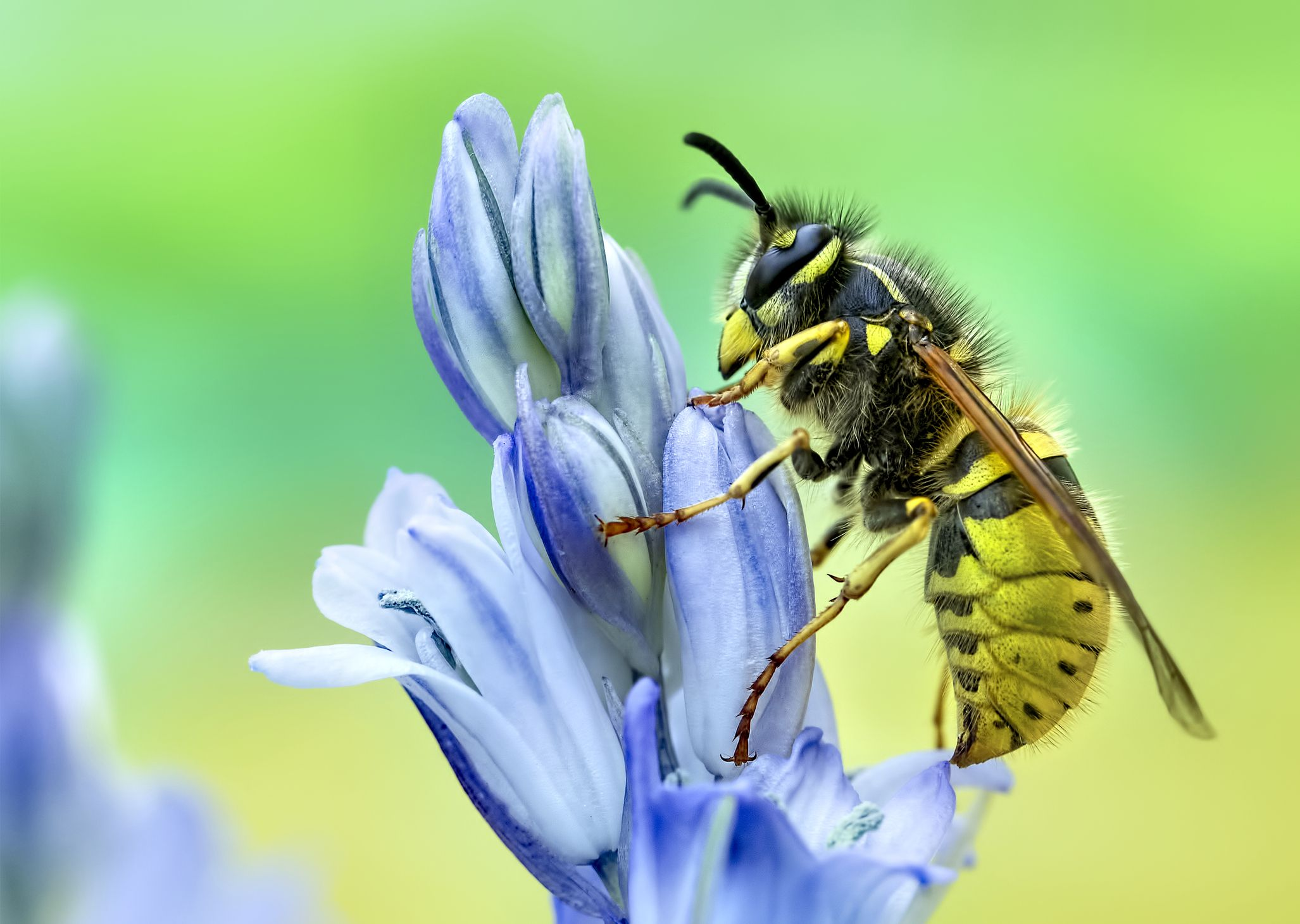 UK Wasps – What you need to know!