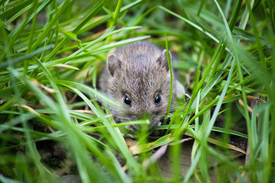 Top 4 Ways To Protect Your Home From Unwanted Wildlife