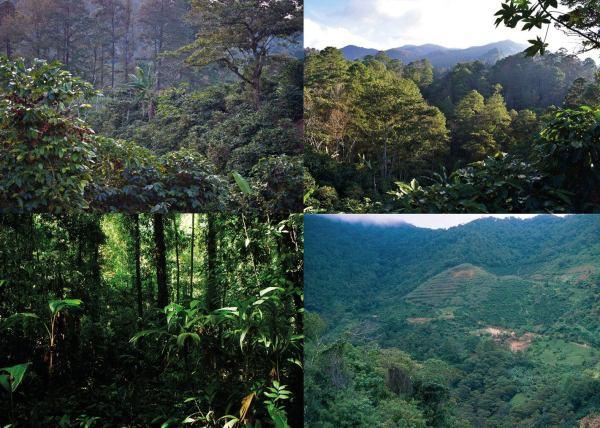 Forest in Honduras