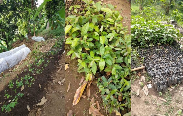 Trees planted in Bali
