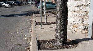 tree-in-sidewalk
