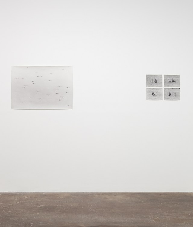 Jochen Lempert, installation view, Midway Contemporary Art. Left: Wasserlaüfer (Delhi), 2011. B&w photograph, silver gelatin print. 25 x 35 ½ inches. Right: Untitled (Pigeons), 2004. 4 b&w photographs, silver gelatin prints. 7 x 9 ¼ inches each, 15 x 19 ¾ inches overall.