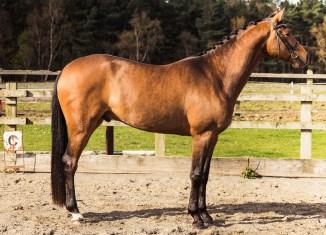 Horse_photographer_Derbyshire-10