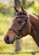 Horse_photographer_Derbyshire-2