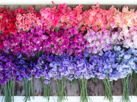 Floret Blog