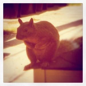 squirrel contemplating